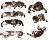 Playing kittens — Stock Photo