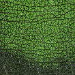 Stock Photo: Green leather texture