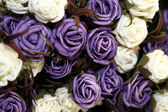 Purple and white roses — Stock Photo