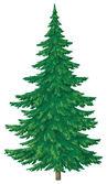 Yeşil Noel ağacı — Stok fotoğraf