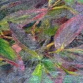 Foliage color background — Stock Photo