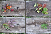 Plants on an old wooden board — Stock Photo