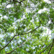 Tree canopy — Foto de stock #3944279