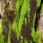 Moss — Stock Photo #4007951