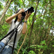 Stock Photo: Photographer in forest