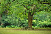 Rest place under big tree — Stock Photo