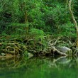 Water in forest — Stock Photo #4411231
