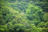 Jungle in morning — Stock Photo