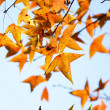 Autumn leaves — Stock Photo #4623540