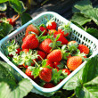 Fresh picked strawberries — Stock Photo #4623557