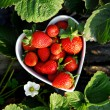 Fresh picked strawberries in heart shape bowl — Stock Photo #4623565