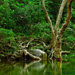 Water in forest — Stock Photo #4941593