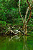 Water in forest — Stock Photo