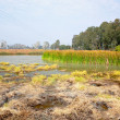 Wetland — Stock Photo #5065749