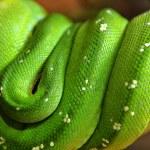 Green snake — Stock Photo #5227715