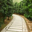 Path in garden — Stock Photo