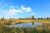 Wetland landscape — Stock Photo