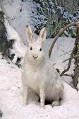 заяц в зимнем лесу — Стоковое фото