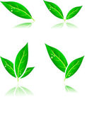 Leaf icons. — Stock Vector