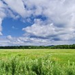Stock Photo: Clouds over green field