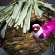 Stockfoto: Souvenir, bird about nest