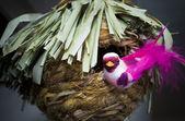 Souvenir, bird about a nest — Stock Photo