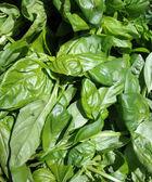 Закрыть вверх Базилик листья на дисплее на рынке фермеров — Стоковое фото