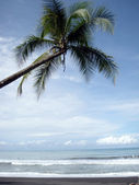 Coconut tree hangs over the beach with birds flying in the surf — Stock Photo