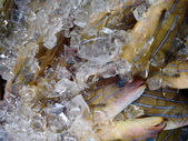 Taape Fish on Ice for sale at a farmers market — Stock Photo