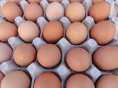 大きい卵の木枠に茶色の卵 — ストック写真