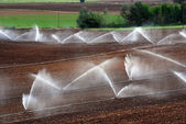 Irrigation — Stockfoto