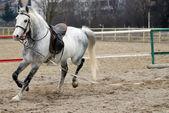 Cavalo — Fotografia Stock