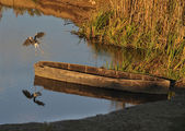 Heron and a wooden boat — 图库照片