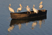 Pelicans on a boat — Stock Photo