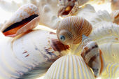 Sea shells — Foto Stock