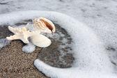 Criaturas del mar — Foto de Stock
