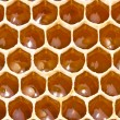 Nectar in the honeycombs — Stock Photo