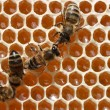 The bees are working in the hive. — Stockfoto #4618834