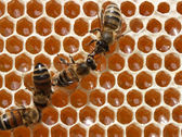 The bees are working in the hive. — Stock Photo