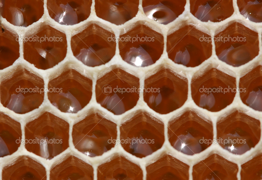 Nectar in the honeycombs awaiting processing in honey bees.  Stock Photo #4618791