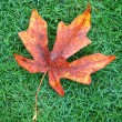 Autumn Leaf on Grass — Stock Photo #4173856