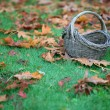 Empty Basket On Grass In Leaves — Stock Photo #4174417