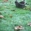 Empty Basket On Grass With Leaves — Stock Photo #4174894