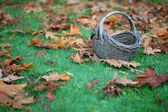 Empty Basket On Grass In Leaves — Stock Photo