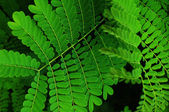 Branches with green leaves — Stock Photo