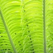Palm Leaf — Stock Photo #4559784