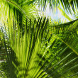Palm leaves — Stock Photo #4605359
