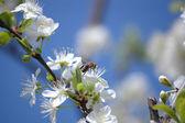 Begining of spring — Stock Photo
