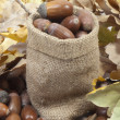 Acorns — Stock Photo #4028193