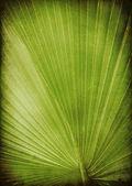 Leaf palm — Stock Photo